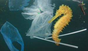 6 Unknown Facts About Single-Use Plastic Bags