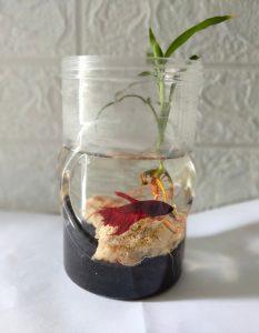 4. Aquariums