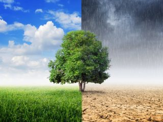 5 Ways Climate Change is Impacting Our Daily Life