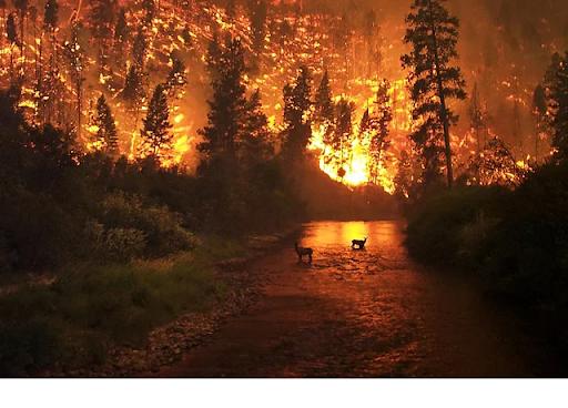 7. Montana Fire