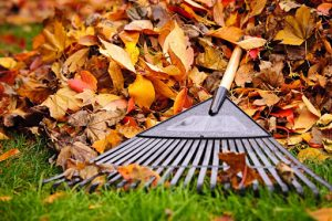 Tools to Clear Your Yard Waste