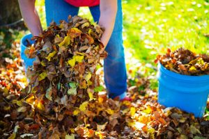 What is Yard Waste Removal?