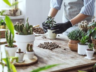 6 DIY Gardening Ideas to Try Now