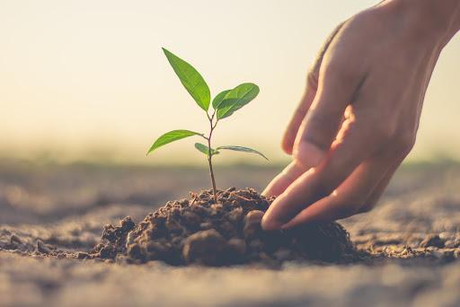 9 Environmental Benefits of Planting a Tree